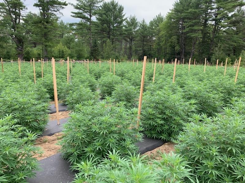Cannabased Wellness - Maine - 1 Acre