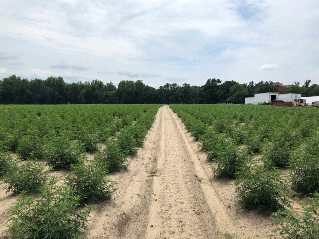 Tommy Dalrymple - Broadway, North Carolina - 8 acres