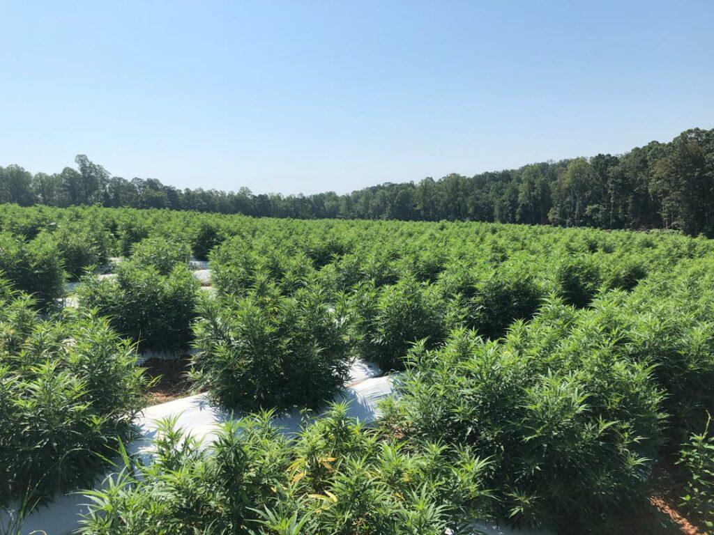 Martha Calderon - Vale, North Carolina - 6 Acres