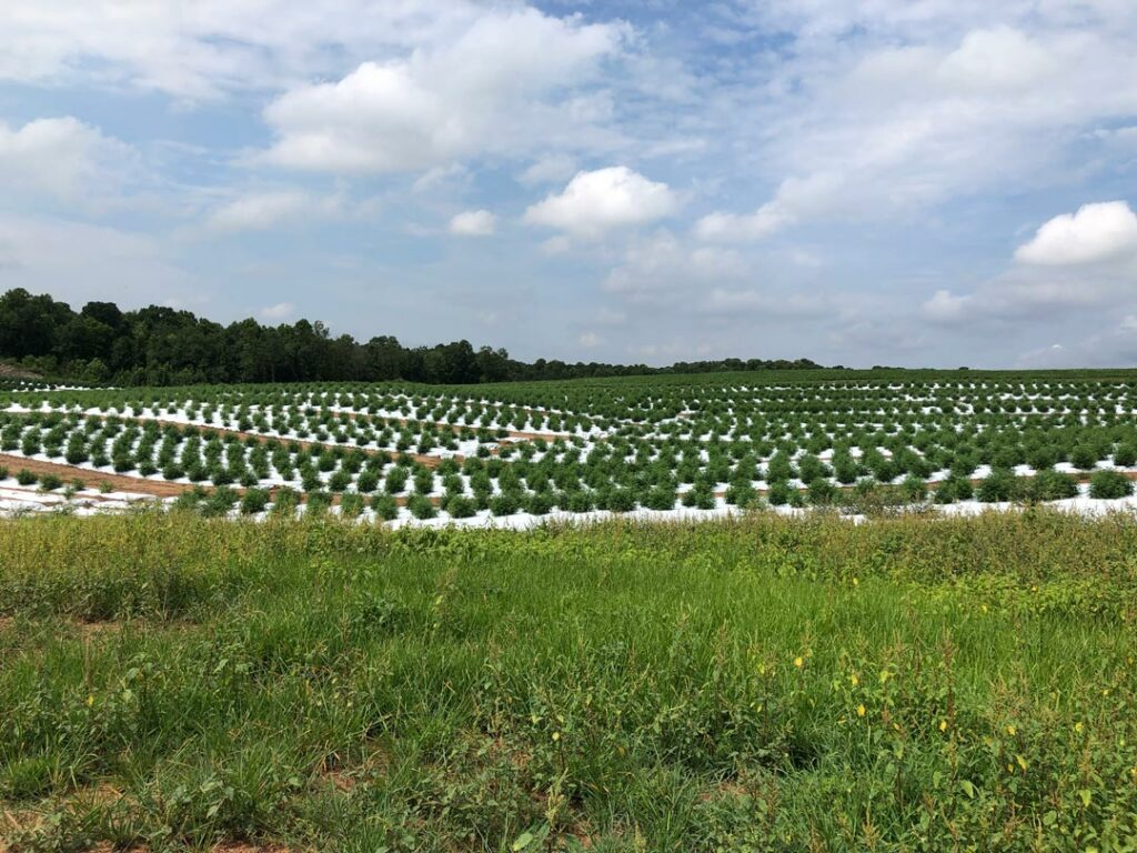Dean Brooks - Goldston, North Carolina - 3 acres